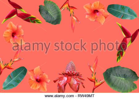 Photo collage of isolated tropical flowers and leaves on coral  background - Stock Photo