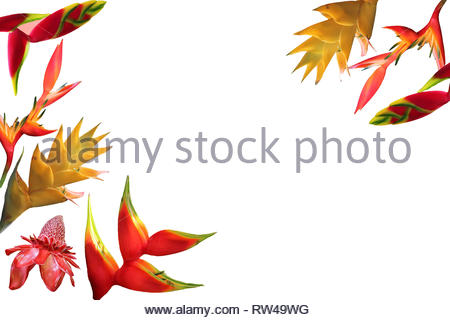Photo collage of isolated tropical flowers on white background - Stock Photo