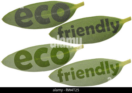 Set of leaves in closeup and the highlighted words eco and friendly - symbols to use as a reference for eco products - Stock Photo