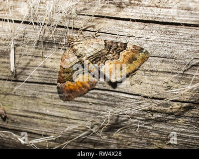Butterfly in the grass, sits on a sheet. Butterfly in the grass, sits on a sheet. - Stock Photo