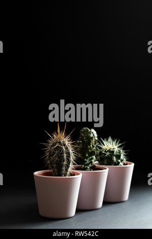 Three cactus in pink pots close up on a black background - Stock Photo