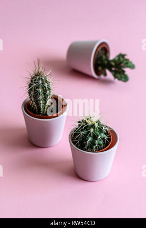 Three tiny cacti in pink pots on a pink background - Stock Photo