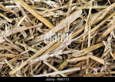 Needle in Haystack 1 - Stock Photo