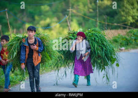 HA GIANG , VIETNAM - SEP 15 : Vietnamese farmers in a countrside near Ha Giang Vietnam on September 15 2018. nearly 80 percent of the population of Vi - Stock Photo