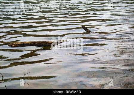 Water in a pond ripples around a log close to the shore. - Stock Photo