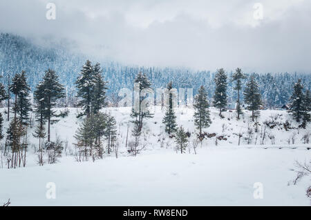 Pine trees growing in a snowy landscape with some amazing clouds in the background. Snow landscape. - Stock Photo