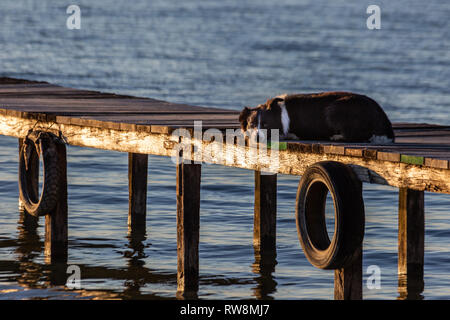 A dog resting on a pier overa a lake, with warm golden hour light - Stock Photo