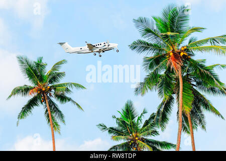 Palms against a blue sky, plane flies over palm trees. Tropical photo background. - Stock Photo