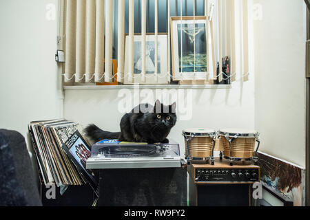 Black cat sits on a vinyl record player in a residential home, London, England, UK - Stock Photo