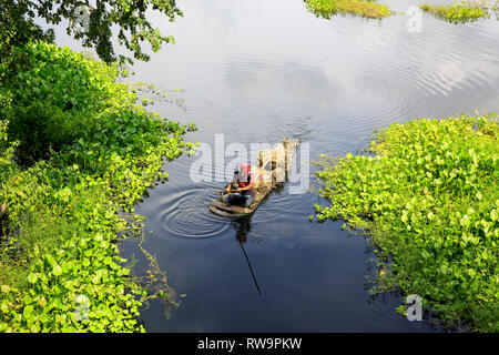 A palm tree boat also called donga carries jute fibres on a marsh in Faridpur, Bangladesh. - Stock Photo