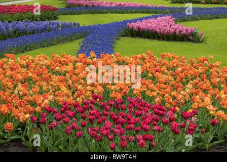 Lisse Netherlands - April 19, 2017: Colorful flowers in the Keukenhof Garden in Lisse, Holland, Netherlands. - Stock Photo