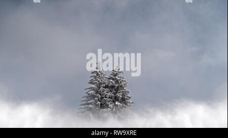 2 snow covered pine trees sit in a cloudy, misty, alpine landscape. The trees sit in a perfect cold winter scene. - Stock Photo
