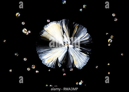 Science and art.  This is citric acid, a  common food preservative,  photographed crystallized on a microscope glass slide. - Stock Photo