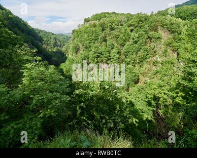 Gorge with a river down between the mountains covered with green forest. Yew and boxwood grove, Sochi, Russia. - Stock Photo
