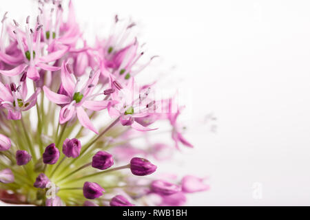 Bouquet of fresh spring flowers, small lily flowers, decorative onion balls, isolated on a white background. - Stock Photo