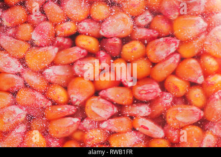 Chemically treated corn maize seed in seeding machine, close up detail with selective focus - Stock Photo