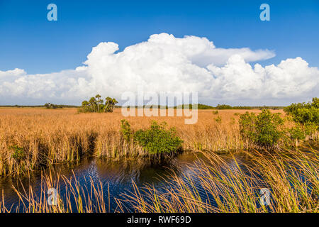 River of grass with Big white clouds in blue sky along Tamiami Trail in Big Cypress National Preserve in southwest Florida - Stock Photo