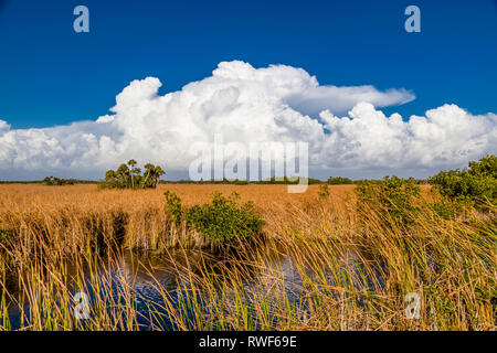 River of grass with Big white clouds in blue sky along Tamiami Trail in Big Cypress National Preserve in southwest Florida