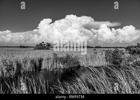 River of grass with big white clouds in blue sky in Big Cypress National Preserve on Tamiami Trail in southern Florida