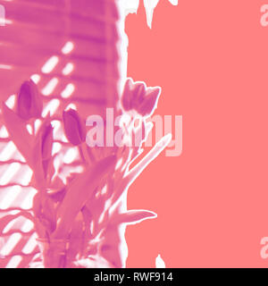 Contemporary floral abstract spring tulips in shades of pink including living coral, the hot trend Pantone Color of the Year for 2019 - Stock Photo