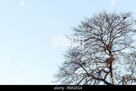 Bare leafless dry dead branches isolated from background. - Stock Photo