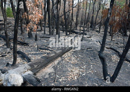 Aftermath of the 2019 bushfire in Tingha in northern new south wales, australia, just south of Inverell - Stock Photo
