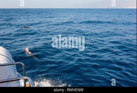 Watching dolphins in natural environment on a boat trip. - Stock Photo