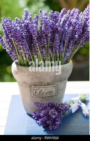 botany, summerly decoration with lavender, Caution! For Greetingcard-Use / Postcard-Use In German Speaking Countries Certain Restrictions May Apply - Stock Photo