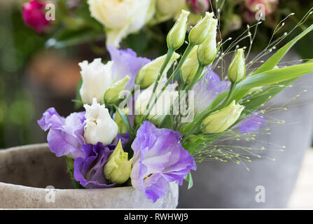 botany, Eustoma in a vessel, Caution! For Greetingcard-Use / Postcard-Use In German Speaking Countries Certain Restrictions May Apply - Stock Photo
