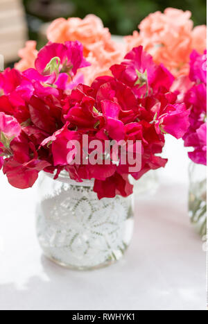 botany, sweetpea / sweet peas in small glass, Caution! For Greetingcard-Use / Postcard-Use In German Speaking Countries Certain Restrictions May Apply - Stock Photo