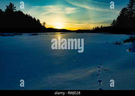 Sunset overlooking a frozen wetland with animal tracks on a cold, winter's evening, Haliburton, Ontario, Canada - Stock Photo
