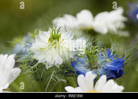 botany, rural bouquet with marguerites and N, Caution! For Greetingcard-Use / Postcard-Use In German Speaking Countries Certain Restrictions May Apply - Stock Photo