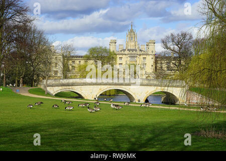 Trinity Bridge and St John's College with Canada Geese, Cambridge - Stock Photo