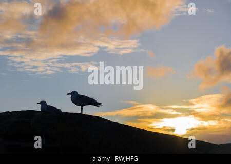 Two seagulls on a curved wall silhouetted against a blue sky at sunrise - Stock Photo