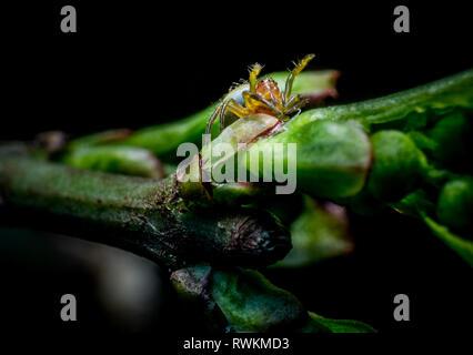 Litlle green spider on tree macro photo - Stock Photo