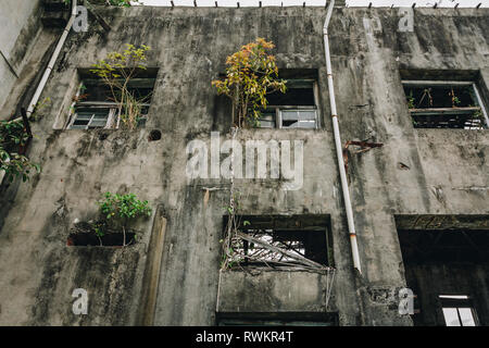 Trees grow in an abandoned building, old ruined industry, factory, warehouse; broken and destroyed windows, exterior view, Hualien, Taiwan - Stock Photo
