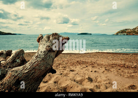 Dead dry tree trunk on the beach pointing towards the sea on a moody day. - Stock Photo