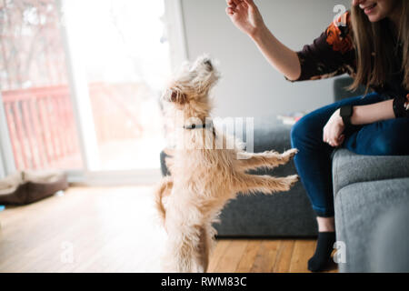 Woman giving dog training treat - Stock Photo