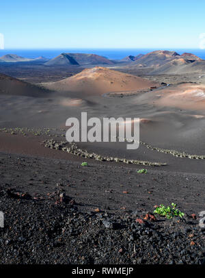 Lunar landscape in Timanfaya National Park with three buses in the far distance, the only vehicles allowed on the road through the park - Stock Photo