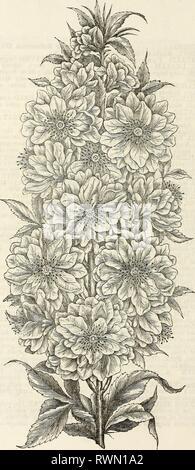 Ellwanger & Barry's descriptive catalogue Ellwanger & Barry's descriptive catalogue of hardy ornamental trees and shrubs, roses, etc., etc., etc ellwangerbarrysd1868moun Year: 1868  PRUNUS TRILOBATA. - Stock Photo