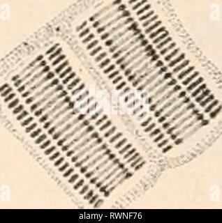 Elektrophysiologie (1895) Elektrophysiologie elektrophysiolog00bied Year: 1895  «iid«' - Stock Photo