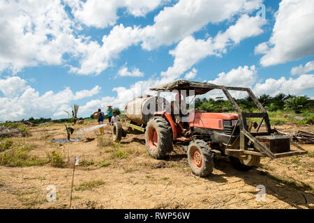 Newly planted palm tree watering activities in replanting areas during the dry season prevent losses from tree mortality - Stock Photo