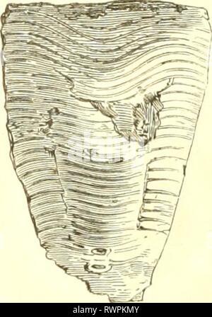 Encyclopédie d'histoire naturelle, ou, Traité - Stock Photo