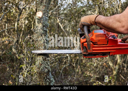 Man cutting trees using an electrical chainsaw in the forest. - Stock Photo