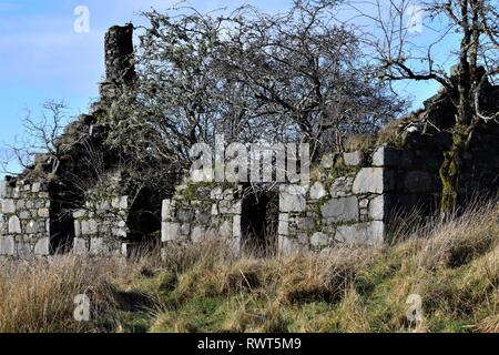 Abandoned ruined croft house filled with hawthorn trees. Gable end chimney of drystone construction. - Stock Photo
