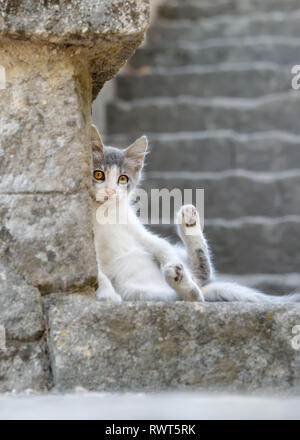 A cute little bicolor cat kitten with yellow eyes resting lazy on a stony stair, exposes its belly and shows its paws, Rhodes, Greece, Europe - Stock Photo