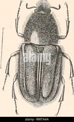 Encyclopédie d'histoire naturelle; ou, Traité - Stock Photo