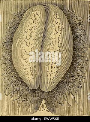 Elements of pathological anatomy (1843) - Stock Photo
