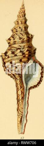 Elements of conchology  an Elements of conchology : an introduction to the natural history of shells and of the animals which form them elementsofconcho00reev Year: 1860  50 - Stock Photo