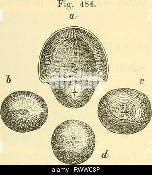 Elemente der palaeontologie (Palaeozoologie) (1884) - Stock Photo